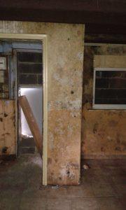 Champignon sur les murs d'une maison à Roubaix